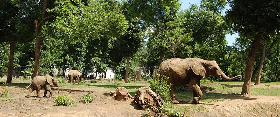 Permalink to: Nyíregyházi Állatpark