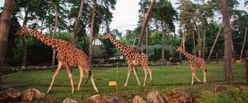 Permalink to: Nagyerdei Kultúrpark
